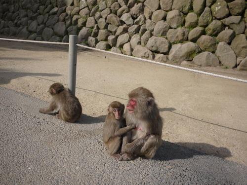 高崎山然動物園