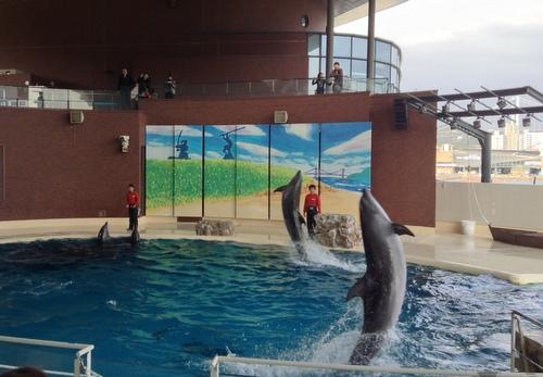 イルカのショー