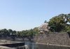 皇居桜の通り抜け